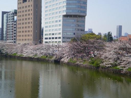 ichigayasakura.JPG