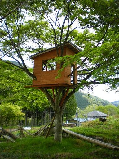 kosugetreehouse.JPG