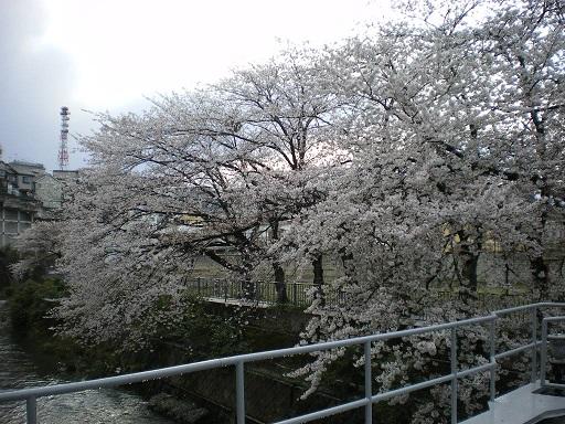 yuuji001.JPG